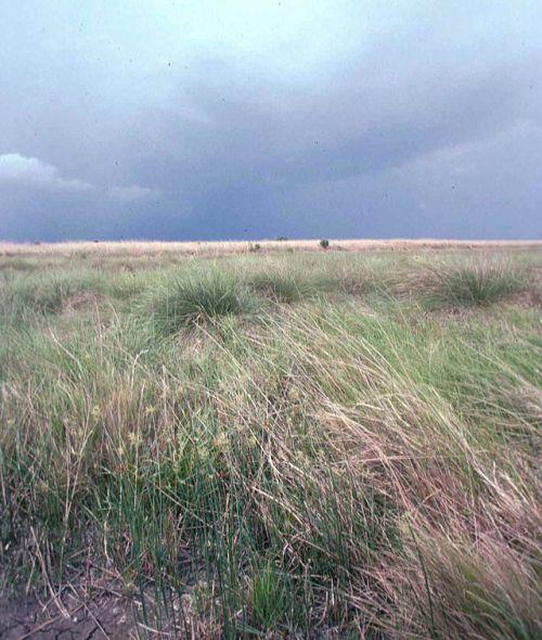 640px-Coastal_prairie